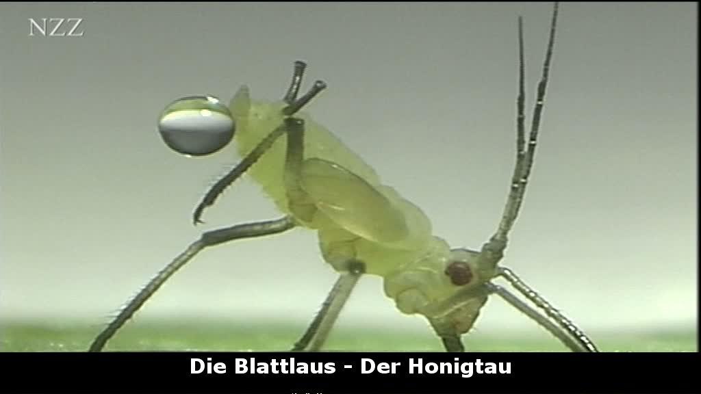 lehrfilme gute insekten b se insekten medien f r. Black Bedroom Furniture Sets. Home Design Ideas
